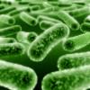 pond bacteria