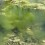 String Algae